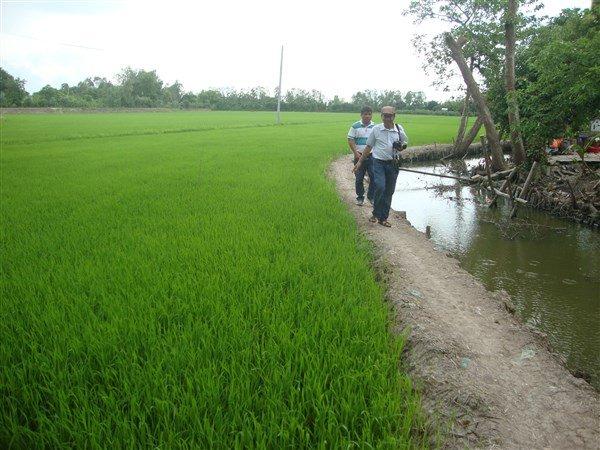 Chúng tôi đi trên những cánh đồng mênh mông