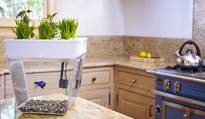 Đặt bể cá trong nhà